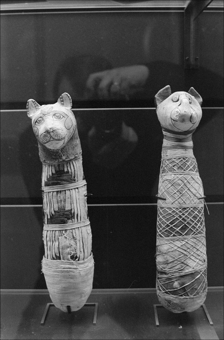 Cat Mummies And A Vague Reflection