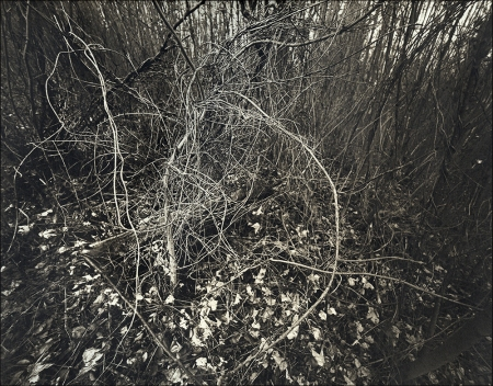 A Palladium Print From That Digital Negative