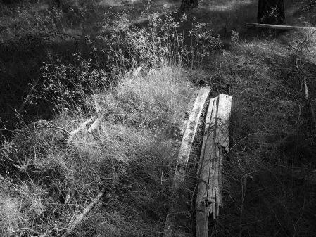 Grass and Fallen Fenceposts