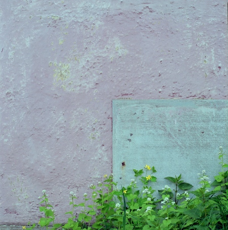 Pastel Colors by Fujicolor 800Pro