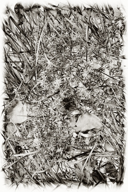 Meadow Detail, from an Experiment with Nik Silver Efex Pro