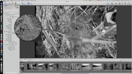 Dewdrops, Unprocessed Neg. Scan @ 4000 dpi