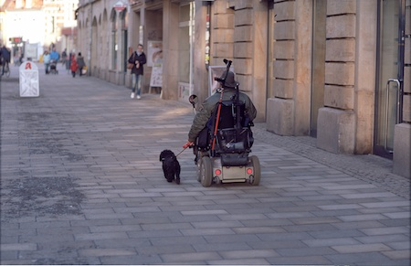 A man driving his poodle.