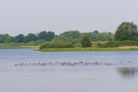 A healthy bird population at the Lebrade ponds.