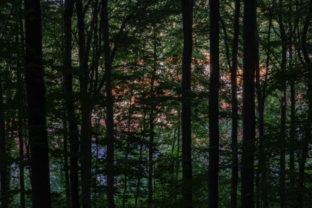 From inside the forest