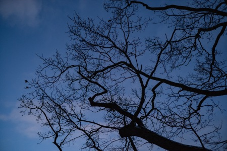 Branches reaching out