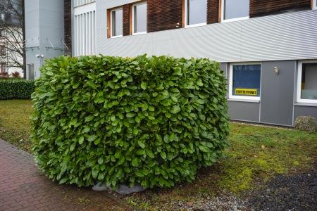Green bush.