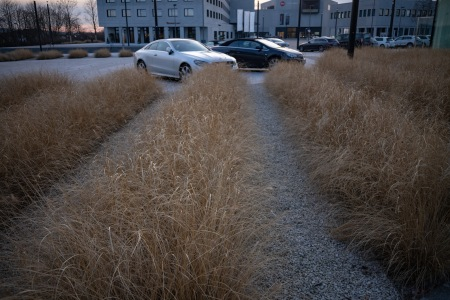 Leaves of grass, executive parking space.